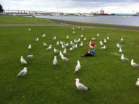Seagull, Picnic, Park, Shoreline, Water, Gull