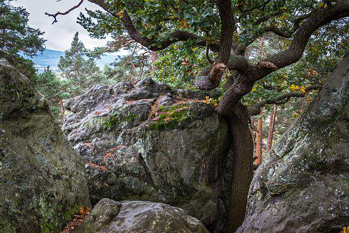 Oak, Rock, Devil's Wall, Hiking, Resin, Hike