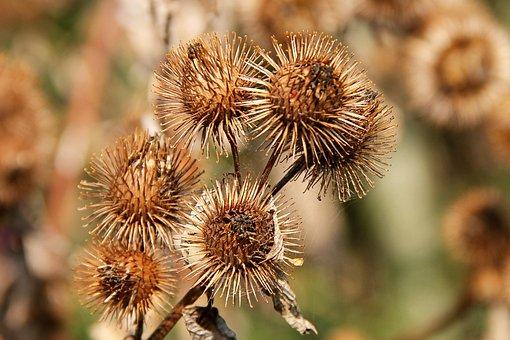 Hook And Loop Closure, Autumn, Brown, Nature, Plant