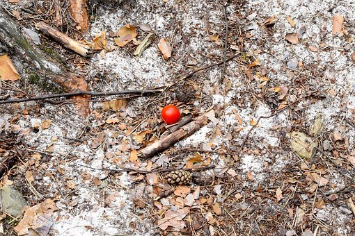 Tomato, Rest, Picnic, Ground, Sand, Nature, Dry
