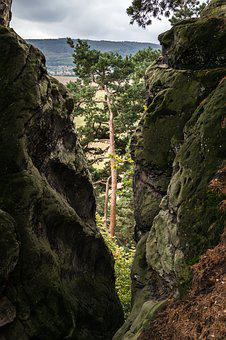 Pine, Rock, Crevice, View, By Looking, Devil's Wall