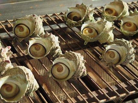 Turban, Shells, Food, Grill