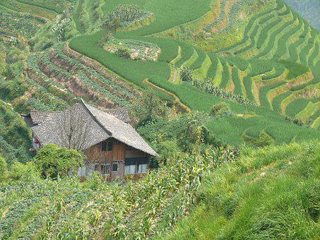Tea, Rice, Wall Bars, Longji, China, Ouse, Farm, Field