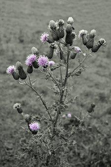 Barb, Blossom, Botany, Branch, Bristle, Bud, Cactus