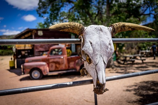Route 66, Rusty Car, A Bovine Skull