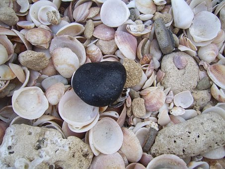 Seashell, Shellfish, Shells, Texture, Background, Black