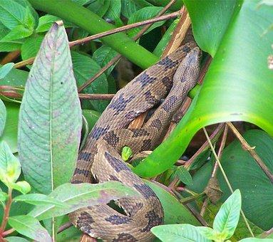 Snake, Nature, Green, Wildlife, Close-up, Viper, Adder