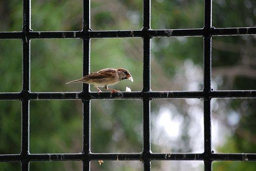 Bird, Wrought Iron, Breadcrumbs