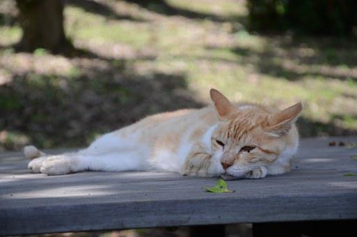 Stray Cat, Take A Nap, Cat, Chillin, Noriben Chatter