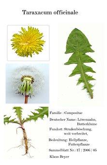 Digitized Herbarblatt, Medicinal Plant, Scanners