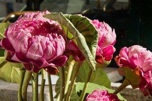 Flower, Fake, Artificial, Decoration, Plastic, Pink
