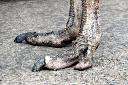 Feet, Ostrich, Bird, Nature, Animal, Foot, Wildlife