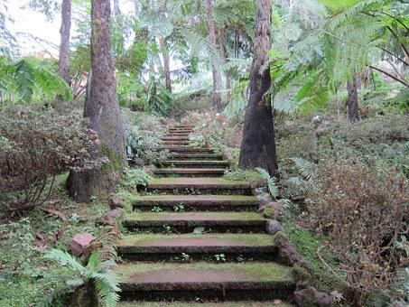 Mystical Stairs, Tropical Garden, Forest, Nature
