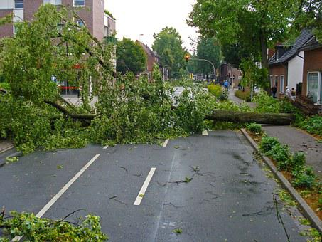 Forward, Electrical Storm, Tree, Road, Uprooted