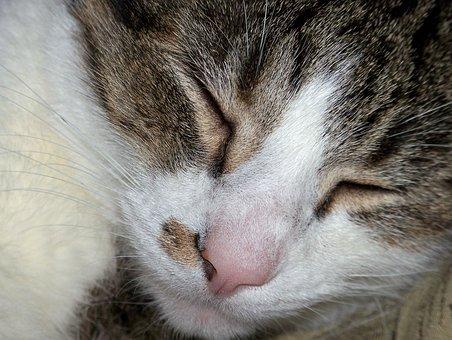 Cat, Sleeping, Sleep, Asleep, Feline, Domestic, Furry