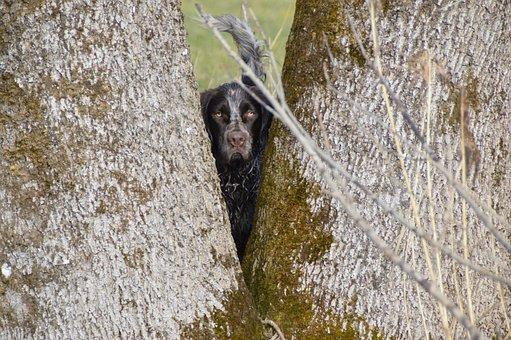 Dog, Tree, German Quail, Quail Dog, View