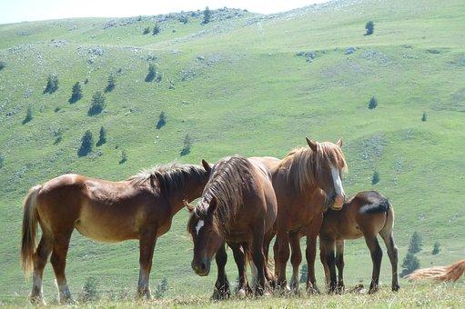 Field Emperor, Horses, Gran Sasso