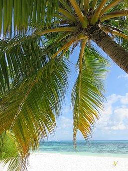 Maldives, Kuredu, Indian Ocean, Summer, Holiday, Beach