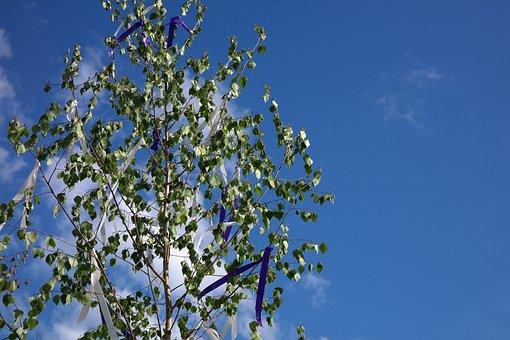 Maypole, Tree, Bands, Flutter, Wind, Birch, Custom