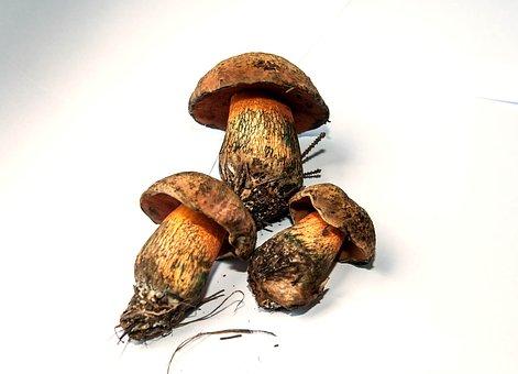 Mushroom, Rac, Witches Placidus