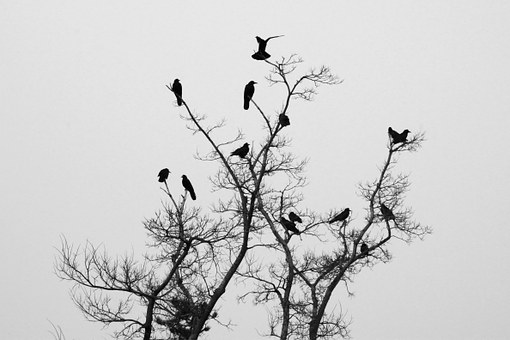 Crow, Animal, New, Birds, Nature, Outdoor, Park, Wing