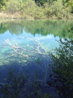 Plitvice Lakes National Park, Croatia, Lake, Tree
