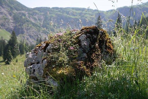 Stone, Limestone, Rock, Alpine, Landscape, Idyll