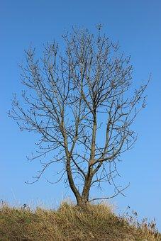 Bare Shaft, Nature, Winter