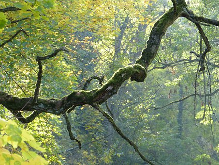 Branch, Tree, Crooked, Bemoost, Gnarled, Autumn