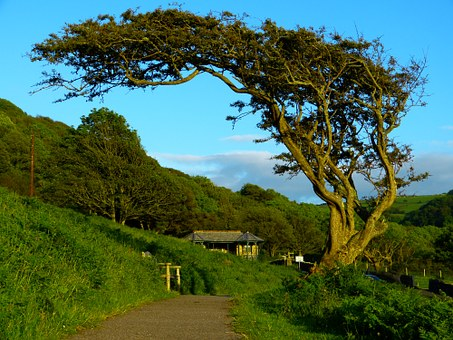 Tree, Crooked, Wind Bent, Gnarled, Nature, Wind