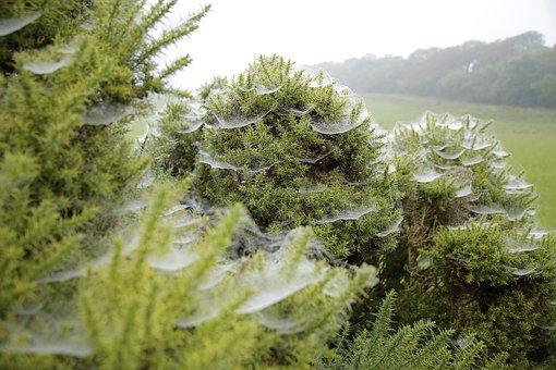 Spider Webs, Cold, Gauze Bush, Green, Field
