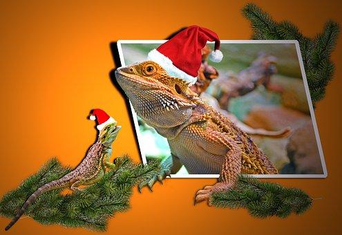 Christmas, Animals, Lizards, Agamas