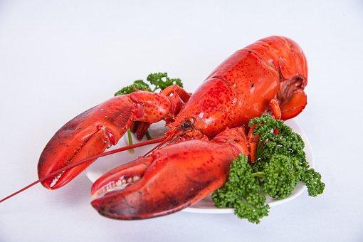 Shrimp, Food, Gauze, Eating Out, Red
