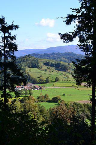 Black Forest, Trees, Nature, Landscape, Sexau, Outlook