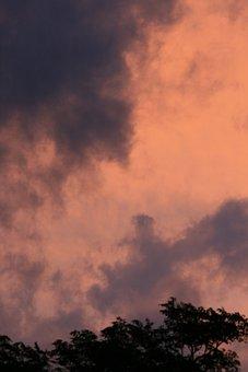 Sky, Sunset, Pink, Glow, Clouds, Wispy, Dark, Tree Tops