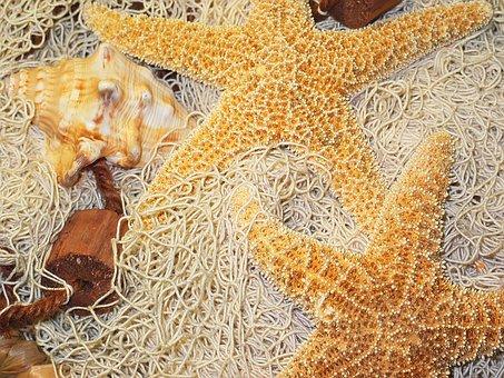 Deco, Starfish, Fishing Net, Decoration, Dried, Nature