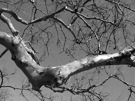 Branch, Tree, Gnarled, Arm, Elbow, Nature, Season