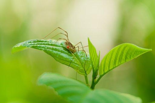 Weber Servant, Leaf, Nature