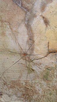 Weber Servant, Kanker, Spider, Animal, Legs, Nature