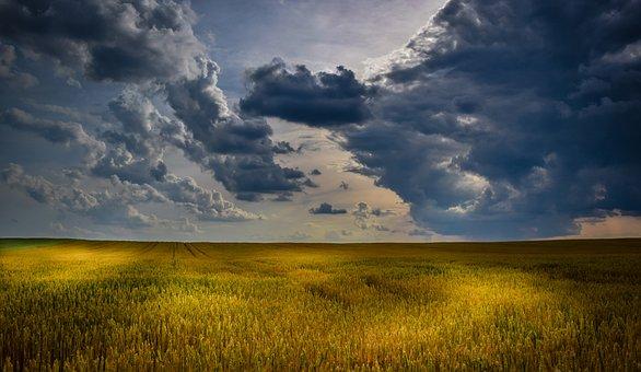 Agriculture, Wheat Field, Clouds, Summer, Cloudscape