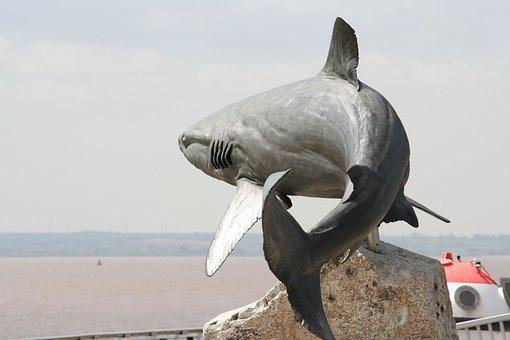 Grey Reef Shark, Sculpture, Shark, Fish, Animal, Statue