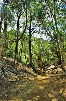 Hanalei, Kauai, Hawaii, Forest, Path, Trees, Palms