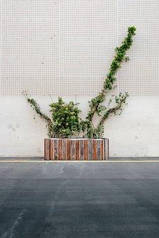 Plant Box, Plants, Road, Wall