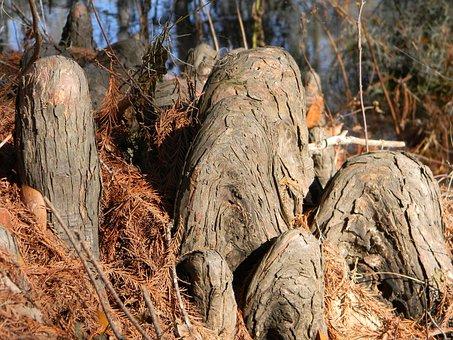 Stumps, Roots, Cypress Knees, Trunk, Bayou, Cypress