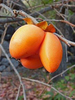 Rosewood, Khaki, Curiously, Fruit, Threesome