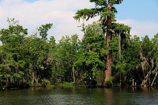 Swamp, Bayou, River, Water, Louisiana, South, Cypress