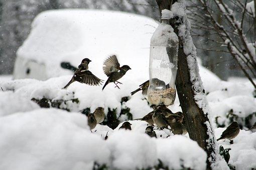 Nature, Bird, Sparrow, Winter, Feeding, Bird Feeder