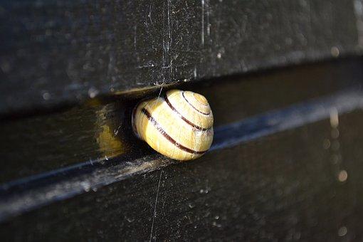 Cochlea, Shell, Snail, Cottage, Home, Mollusc