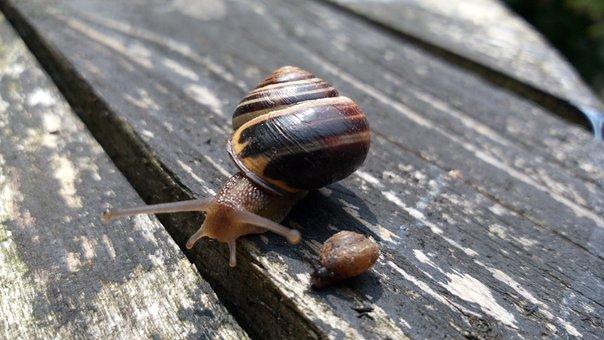 Snails, Snail, Old, Wood, Crawling, Mollusc, Cochlea