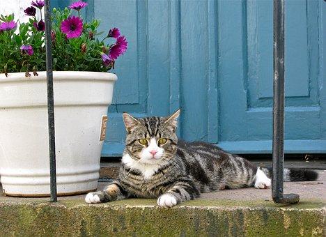 Cat, Tiger Cat, Pet, Domestic Cat, Animal, Rest